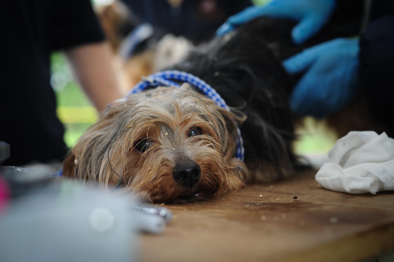 unleashed louisiana u0027s dog breeding regulations strengthened 225