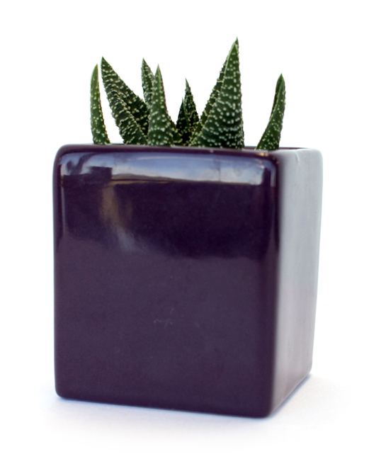 Fight Off Winter Blues With Budget Friendly Succulent