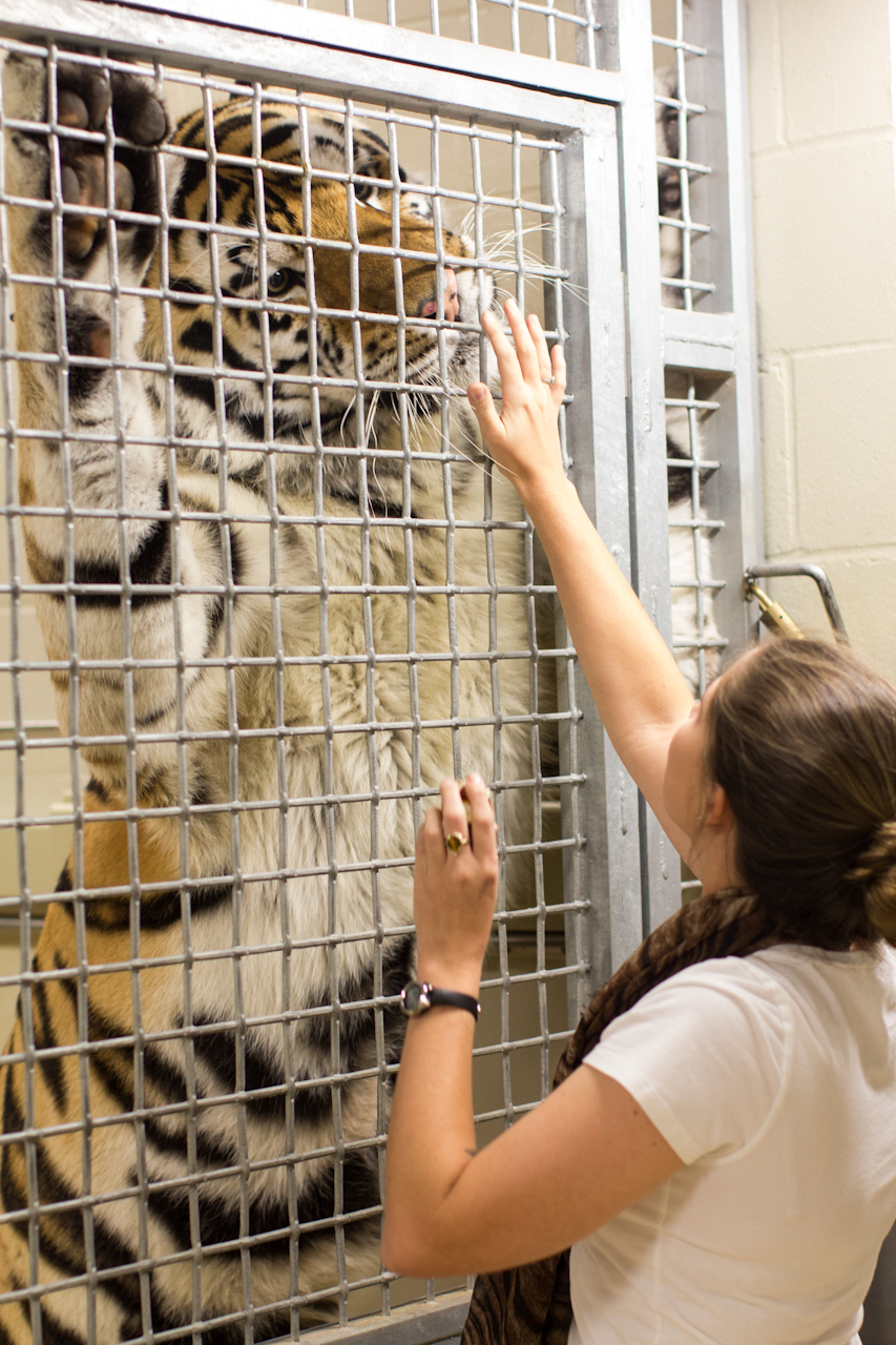 Meeting Mike The Tiger 225