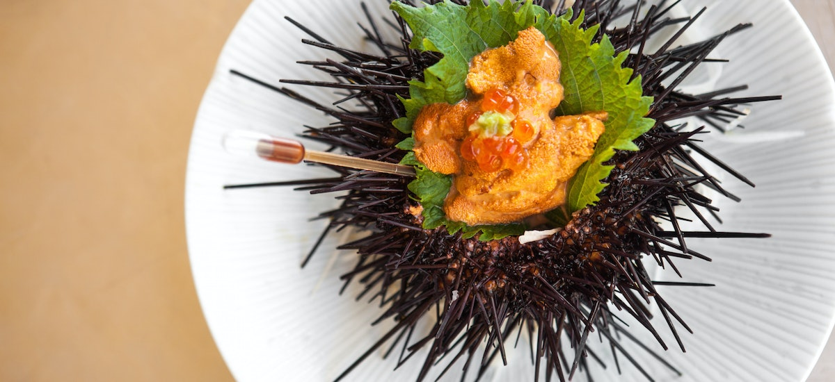 a look at how rare fresh sea urchin is prepared at umami japanese