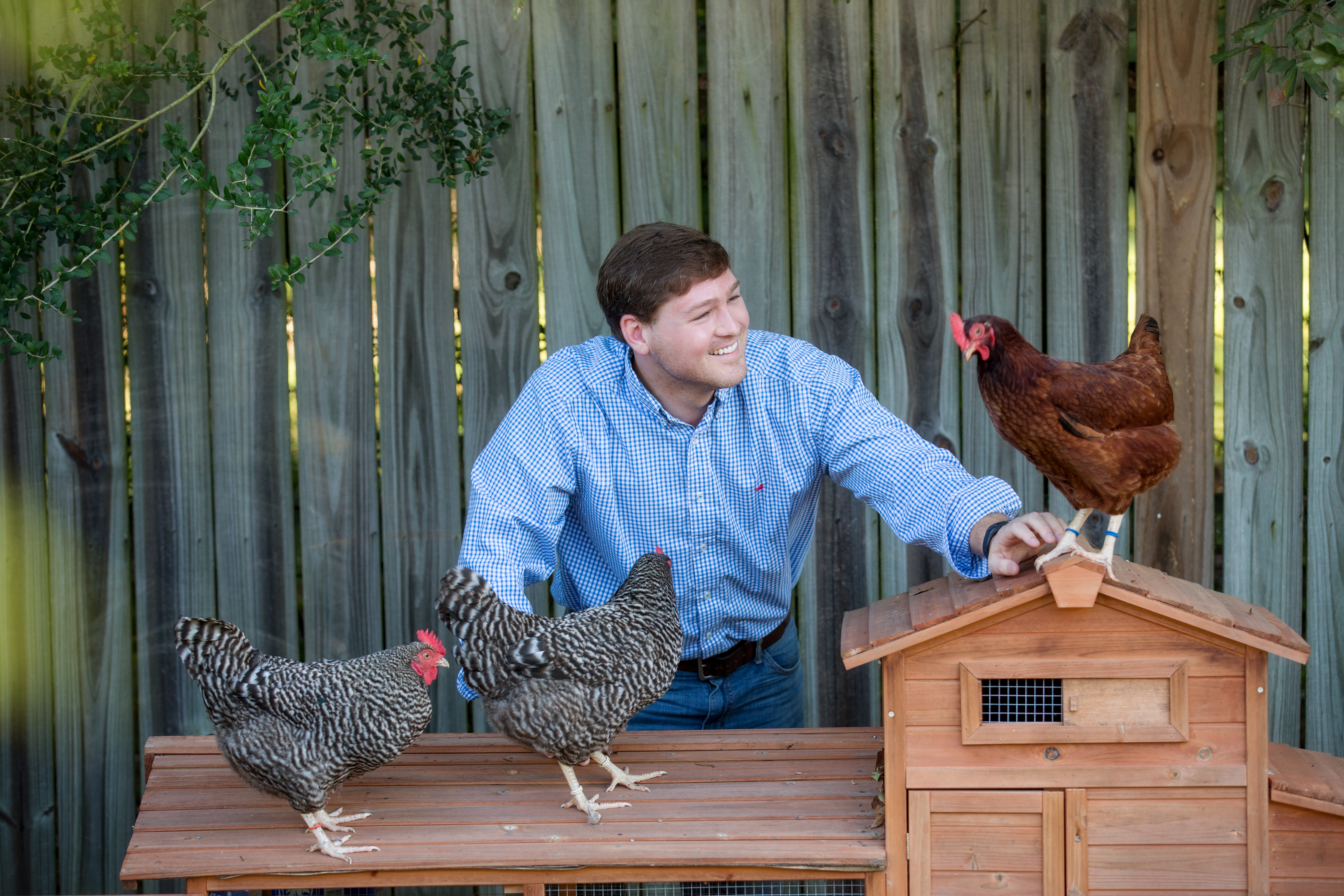 The surprisingly approachable hobby of raising chickens and