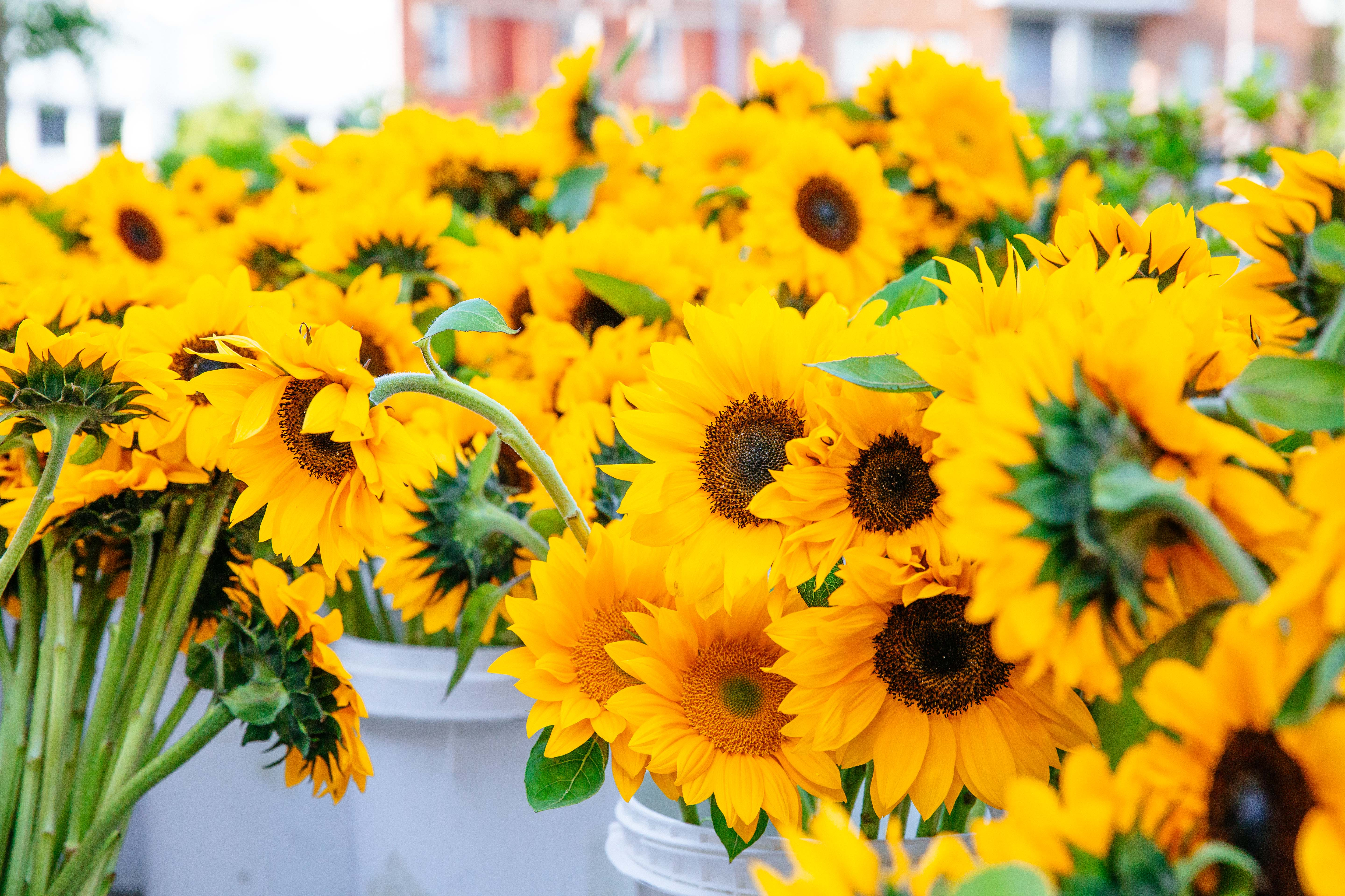 Bud Bentons Flowers Bring Sunshine To The Red Stick Farmers Market